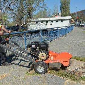 Изрязват пъновете на премахнатите тополи край реката в Хасково
