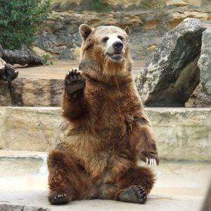 Паркът за танцуващи мечки край Белица отваря врати