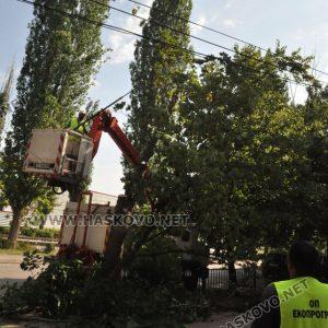 """Премахнаха опасното дърво по бул.""""България"""""""