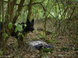 Разследват в района на Маджарово за отровен Белоглав лешояд