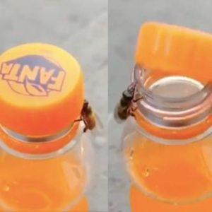 📹 Две пчели със задружни усилия отварят капачка на безалкохолно